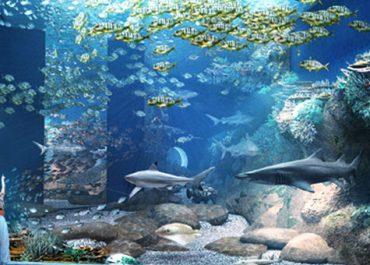 Oman Aquarium